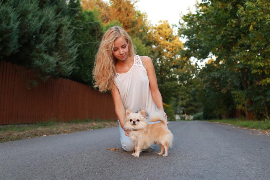 Monti Piesek Chihuahua