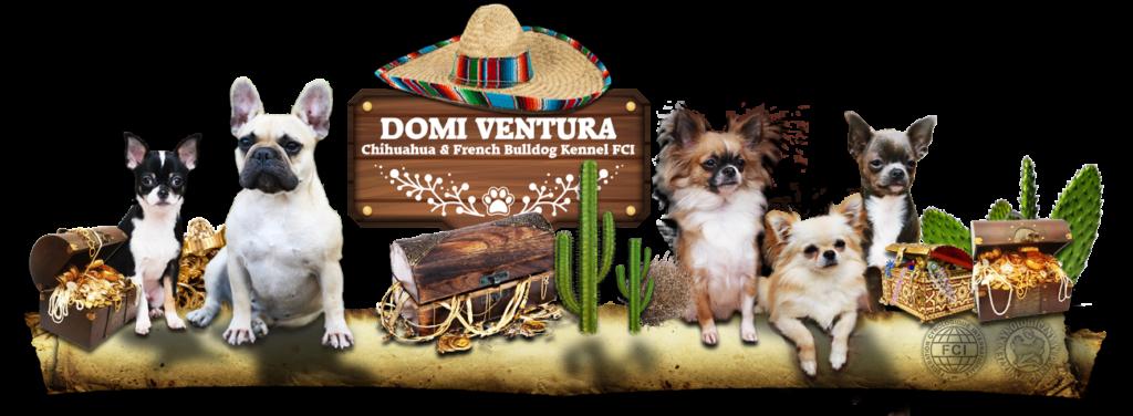 Domi Ventura