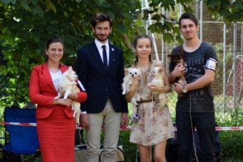 wystawa psów rasowych w Kaliszu